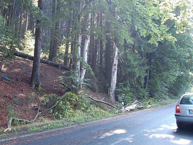 Díky včasnému zásahu hasičů byly také u Nemanic silnice ráno sjízdné, na krajnici byly už jen zbytky popadaných stromů
