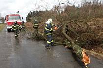 Horšovskotýnští hasiči v úterý odstraňovali popadané stromy hned na několika silnicích.