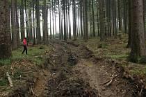 Nešetrným přibližováním vytěženého dřeva poškodili kořeny okolních stromů a další.