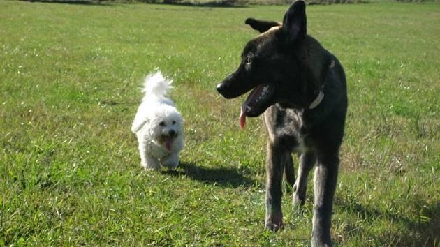 S výcvikem vaše psa vám pomůžou v Kolovči.