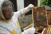 VČELAŘ. Bez včel by těžko dosahovali úrody ovocnáři a zemědělci. Podle krajského radního Petra Smutného by se podpora včelařů měla v budoucnu pokud možno zvyšovat.