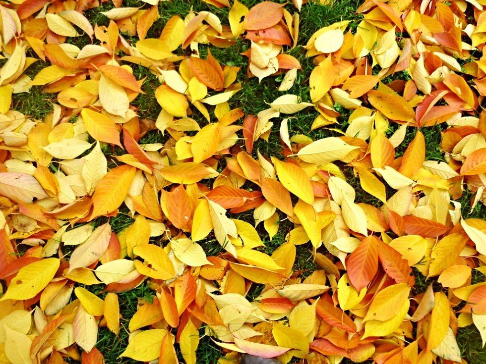 Podzim života nemusí  být jenom čekáním na  konec života. Tak jako příroda na podzim, může být život seniora pestrou paletou zájmů, naplnění dávných přání a očekávání něčeho nového.