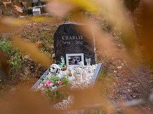 Zvířecí hřbitov v Hradci