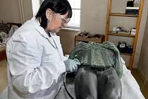 Průzkum na VŠCHT v Praze ukázal, že socha je vyrobena ze slitiny mědi, zinku a cínu, nejedná se tedy o typickou bronzovou slitinu.