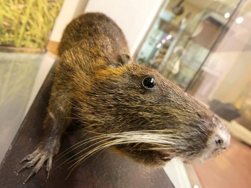 Na nové výstavě v Muzeu východních Čech si na své přijdou i milovníci přírody.
