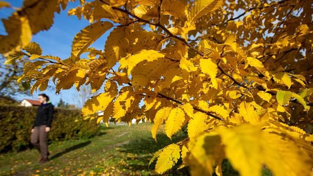 Podzim na Královéhradecku.