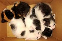 Koťata v krabici.