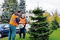 Nátěr a postřik stromů ochranným prostředkem před zloději.