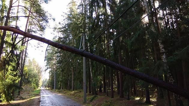 Napůl spadlý strom ohrožující lidi na lesní cestě Hradečnice.