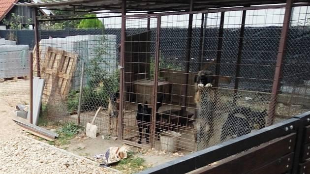 Psi zabijáci v kleci - pachatelé smrtícího útoku na pětiletého chlapce v obci Lužec nad Cidlinou.