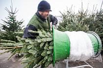 Prodej vánočních stromků.