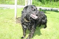 Kříženec: jméno: Don,  pohlaví: pes, věk: 7 let, barva: černá, velikost v kohoutku: 40cm. Kříženec středního vzrůstu, veselé temperamentní povahy. Vhodný jako společník, k domku se zahradou.