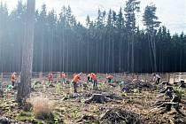 Dobrovolníci sázeli stromky v Černilově.