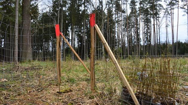 Díky re-use projektu lesníci vysadili šest stovek nových dubů