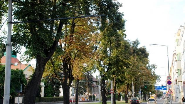 Stromořadí v Lipkách v Hradci Králové.