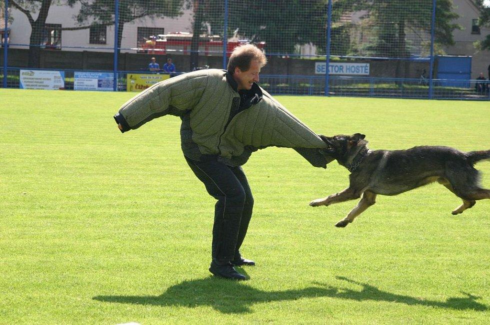Ukázka zadržení pachatele služebním psem.