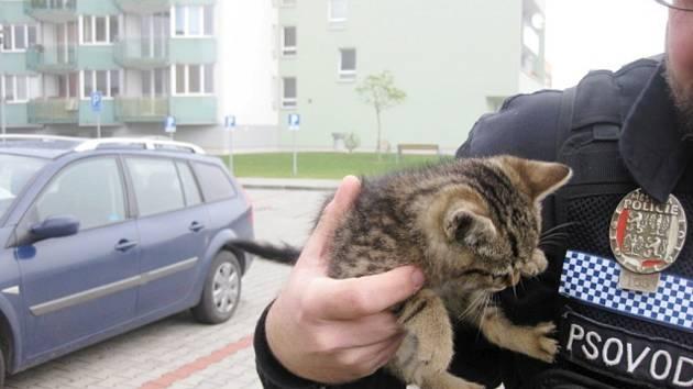 Odchycené kotě v Hradci Králové.
