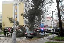 Vichr si nevybíral. V některých případech skončila pod korunami vyvrácených či zlomených stromů i zaparkovaná auta.