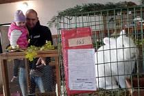 Posvícenská výstava zvířat v Chlumci nad Cidlinou.