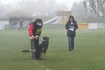 Mistrovství republiky IPO ve sportovním výcviku psů.