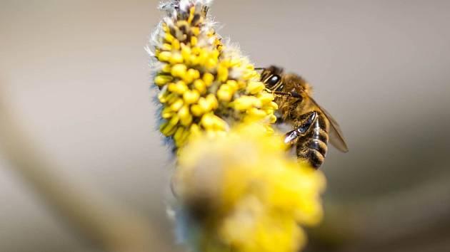 Včelí život v jarním období.