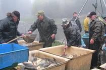 Výlov ryb z Malšovického rybníku.