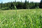 Tachov zasáhla pylová vánice.Vítr žlutozelený prášek přivál ze smrkových lesů v okolí měta. (Zrychlený záznam)
