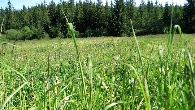 Teplé a větrné počasí stojí za nánosy pylu, jež v posledních dnech zasypaly Plzeňský kraj.