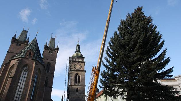 Instalace vánočního stromu na Velkém náměstí v Hradci Králové.