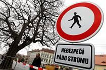 Technické služby Hradec Králové opět ohradily staré a poškozené stromy hrozící pádem, čímž reagovaly na výstrahu meteorologů před větrem. Jedná se o pět cizokrajných katalp rostoucích před budovou krajského soudu.