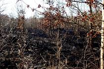 Požár lesa u obce Králíky na Hradecku.