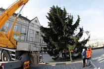 Masarykovo náměstí zdobí vánoční strom.