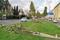 Vichr nevydržely mladé platany ve Střelecké ulici.
