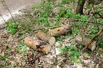 Pořezaný strom. Ilustrační fotografie.
