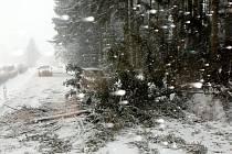 Strom spadlý přes silnici v Javornici.