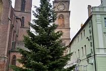První z hradeckých vánočních stromů stojí na Velkém náměstí.