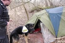 Monitoring královéhradeckých bezdomovců.