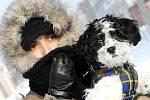 Silné mrazy, až mínus 27 stupňů, zasáhly Hradec Králové 27. ledna 2010.