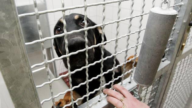 Nový útulek pro zvířata za více než dvacet milionů korun otevřela hradecká radnice nedaleko lesního hřbitova v Malšovicích. Areál nabízí 72 míst pro psy, z toho osm v karanténě.