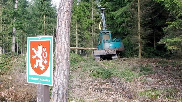 Těžba harvestorem v přírodní památce Černá stráň.