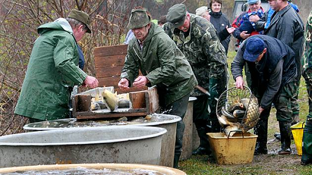 Šefarák vydal přes čtyři tuny ryb