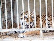 Útěk zvířat ze štítského Bioparku.