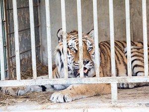 Útěk zvířat z Bioparku Štít