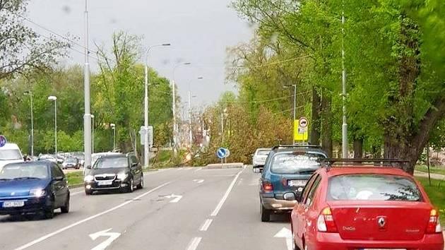 Spadlý strom u hradecké Flošny strhl trolejové vedení.