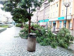 Zničené stromy na Masarykově náměstí