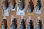 Sběratel nabízel brouky, z nichž téměř 400 patřilo mezi chráněné druhy.
