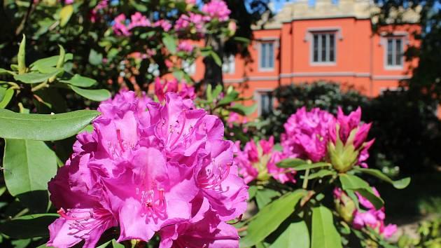 Květiny pro kamenného motýla - výstava na zámku Hrádek u Nechanic.