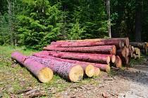 Hradecké lesy líčí na kůrovce růžovou.