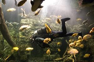 Obří akvárium v Hradci Králové.