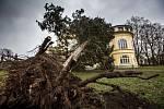 Pád stromu na zámek v Dobřenicích.